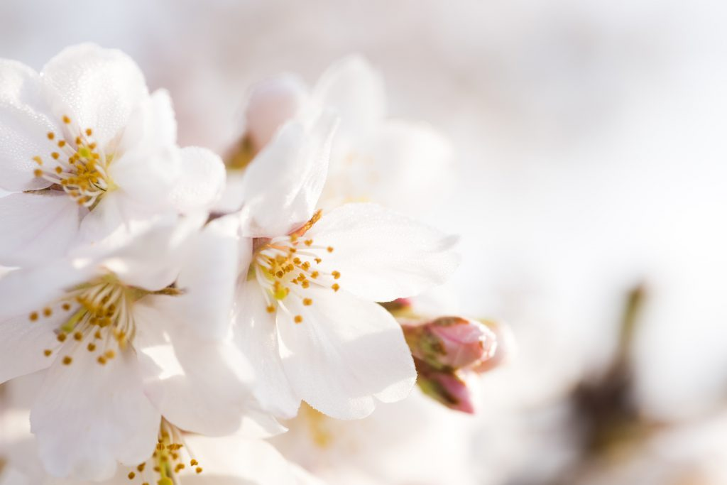 中医学における春の過ごし方